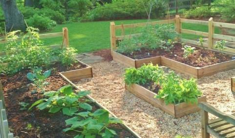 Family-Veggie-Garden-680x400
