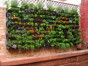 vertical-herbs-300x225