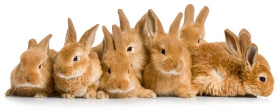 Main_Rabbit_Image